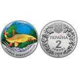 Марена днепровская. (Днепровский усач). Монета 2 гривны. 2018 год, Украина.